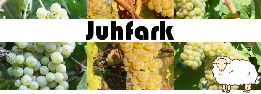 ハンガリーワインの豆知識